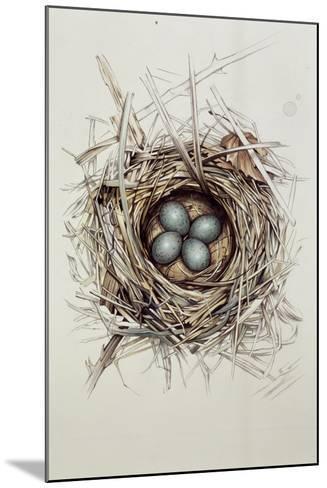 Turdus Merula (Blackbird), 1999-Sandra Lawrence-Mounted Giclee Print