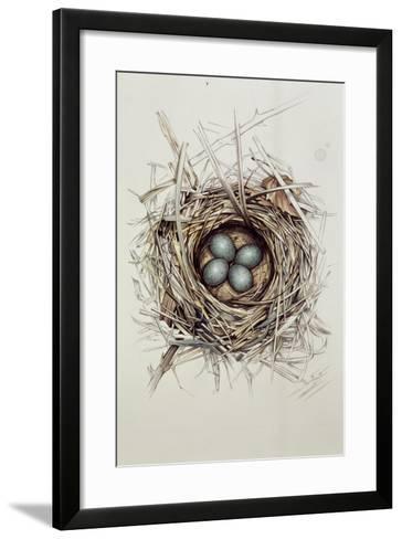 Turdus Merula (Blackbird), 1999-Sandra Lawrence-Framed Art Print