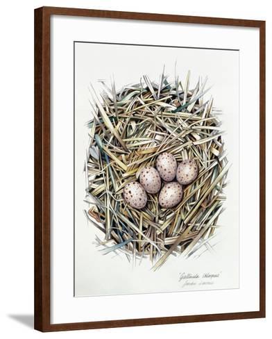 Gallinula Choepus (Moorhen), 2000-Sandra Lawrence-Framed Art Print