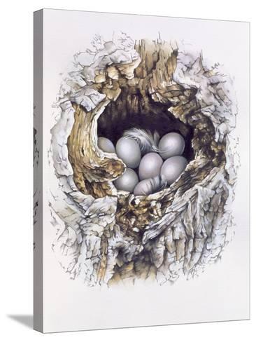 Bubo Bubo (Barn Owl), 2001-Sandra Lawrence-Stretched Canvas Print