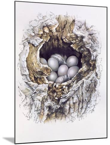 Bubo Bubo (Barn Owl), 2001-Sandra Lawrence-Mounted Giclee Print