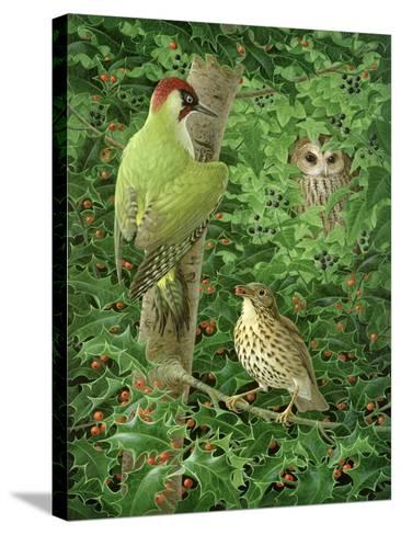 Woodpecker, Owl and Thrush-Birgitte Hendil-Stretched Canvas Print