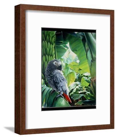 African Grey Parrot, 1990-Sandra Lawrence-Framed Art Print