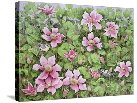 Nesting in Clematis-Pat Scott-Stretched Canvas Print