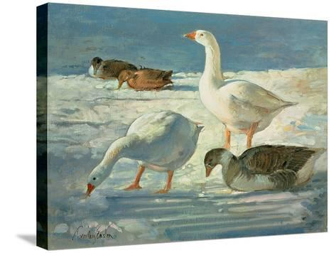 Geese and Mallards, 2000-Timothy Easton-Stretched Canvas Print
