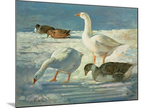 Geese and Mallards, 2000-Timothy Easton-Mounted Giclee Print