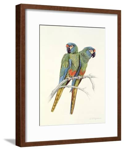 Illiger's Macaw, 1987-Mary Clare Critchley-Salmonson-Framed Art Print