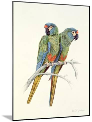 Illiger's Macaw, 1987-Mary Clare Critchley-Salmonson-Mounted Giclee Print