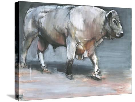 Fresno, Galloway Bull-Mark Adlington-Stretched Canvas Print