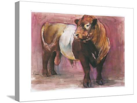 Zeus, Red Belted Galloway Bull, 2006-Mark Adlington-Stretched Canvas Print
