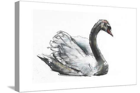 Swan-Mark Adlington-Stretched Canvas Print