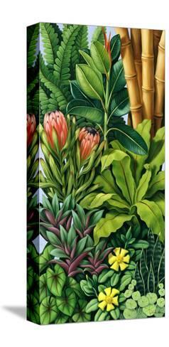 Foliage III, 2005-Catherine Abel-Stretched Canvas Print
