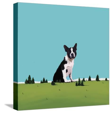 Boston Terrier, 2008-Marjorie Weiss-Stretched Canvas Print