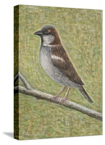 House Sparrow, 2008-Ruth Addinall-Stretched Canvas Print