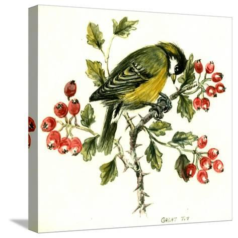 Great Tit on Hawthorn-Nell Hill-Stretched Canvas Print