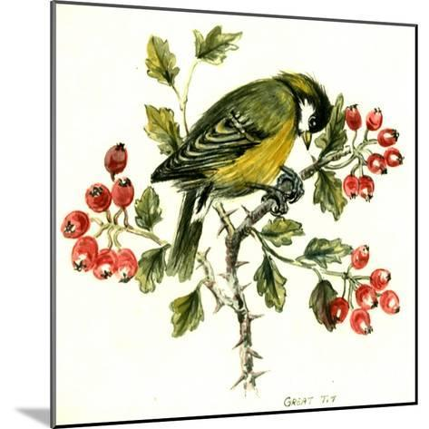 Great Tit on Hawthorn-Nell Hill-Mounted Giclee Print