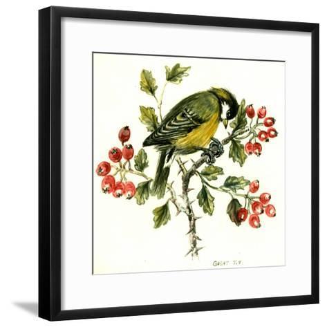 Great Tit on Hawthorn-Nell Hill-Framed Art Print