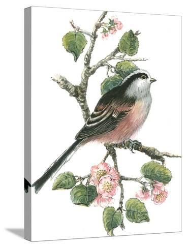 Long Tailed Tit and Cherry Blossom-Nell Hill-Stretched Canvas Print