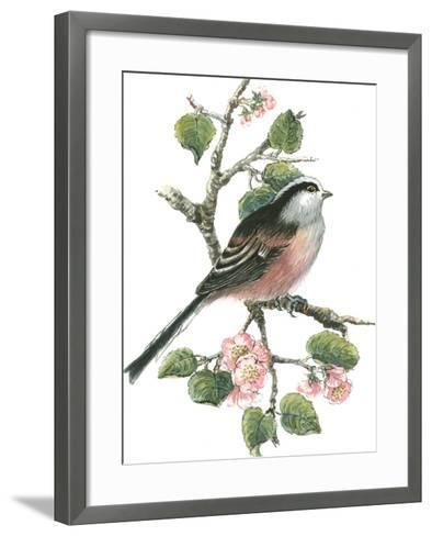 Long Tailed Tit and Cherry Blossom-Nell Hill-Framed Art Print