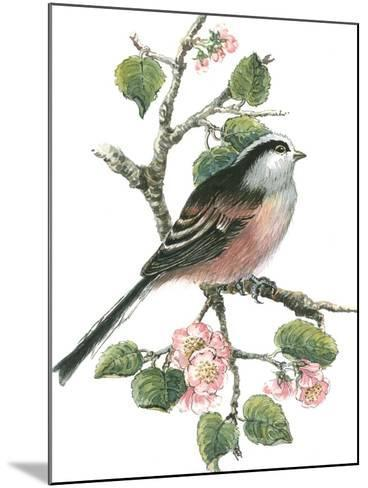 Long Tailed Tit and Cherry Blossom-Nell Hill-Mounted Giclee Print