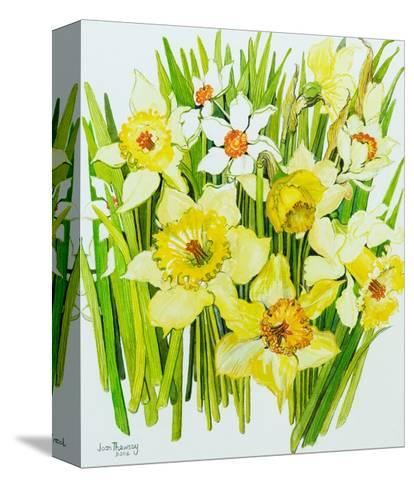 Daffodils and Narcissus-Joan Thewsey-Stretched Canvas Print