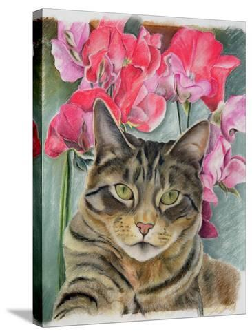 Cat with Sweet Peas-Anne Robinson-Stretched Canvas Print