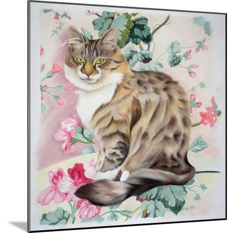 Long Hair Tabby-Anne Robinson-Mounted Giclee Print