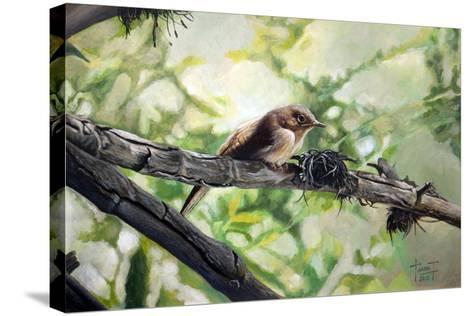House Wren, the Harmonious Singing, 2010-Cruz Jurado Traverso-Stretched Canvas Print