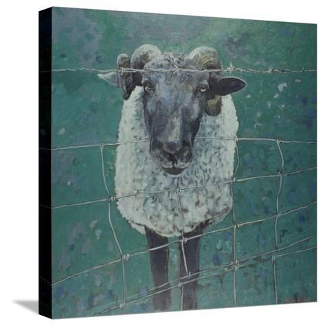 Waiting Sheep, 2000-Peter Wilson-Stretched Canvas Print