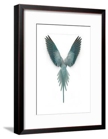Blue Ringneck Parrot-Christopher Marley-Framed Art Print