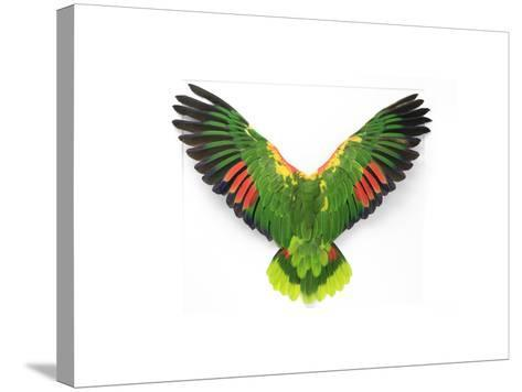 Double Yellow Headed Amazon-Christopher Marley-Stretched Canvas Print