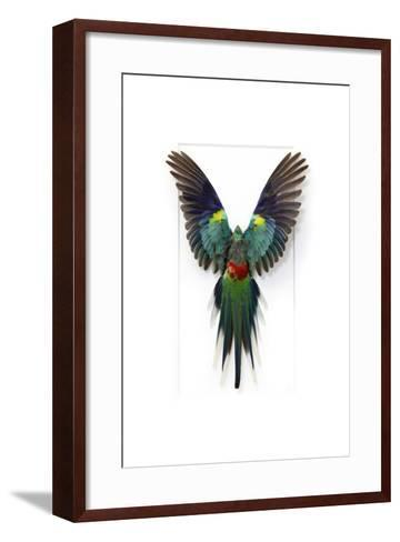 Many Colored Parakeet-Christopher Marley-Framed Art Print