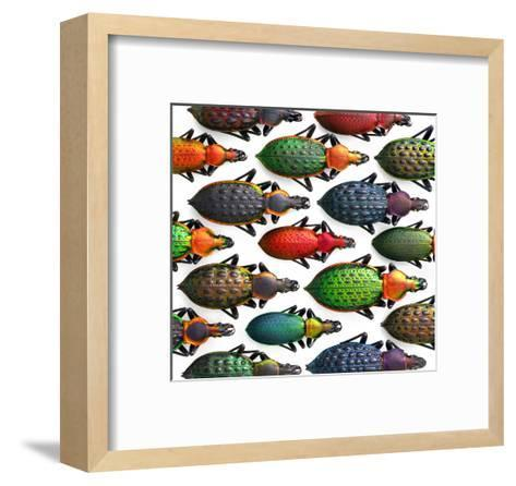 Asian Ground Beetles-Christopher Marley-Framed Art Print