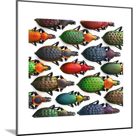 Asian Ground Beetles-Christopher Marley-Mounted Photographic Print