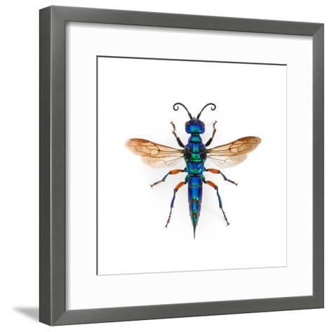 Borneo Wasp-Christopher Marley-Framed Art Print