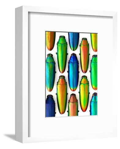 Cobaltina-Christopher Marley-Framed Art Print