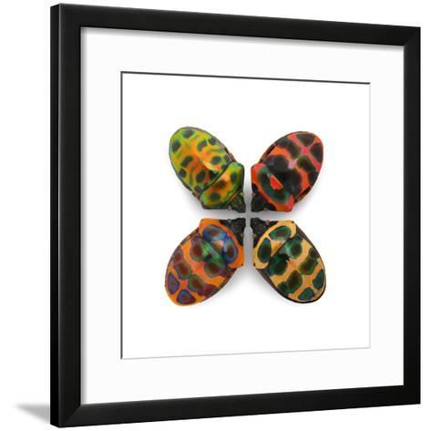 Four Shield Bugs-Christopher Marley-Framed Art Print