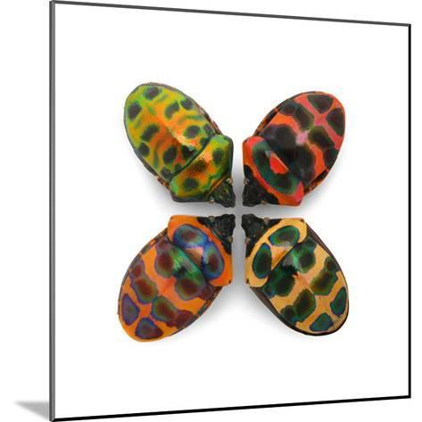 Four Shield Bugs-Christopher Marley-Mounted Photographic Print