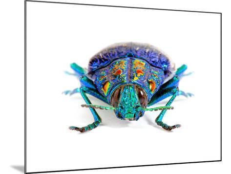 Gemma Woodboring Beetle-Christopher Marley-Mounted Photographic Print