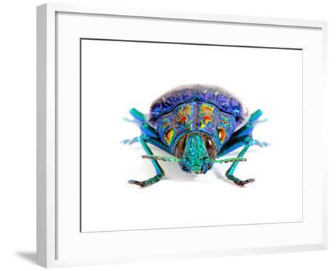 Gemma Woodboring Beetle-Christopher Marley-Framed Art Print