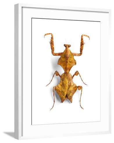 Mantis 1-Christopher Marley-Framed Art Print