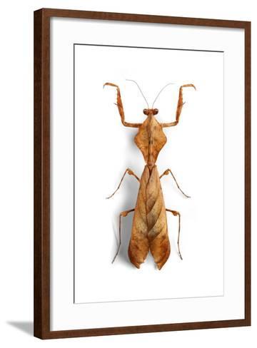 Mantis 3-Christopher Marley-Framed Art Print