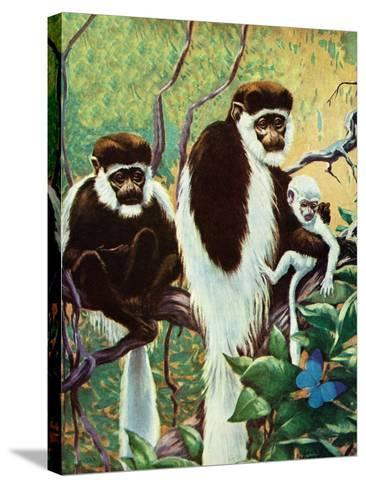 Monkeys - Child Life-Jack Murray-Stretched Canvas Print