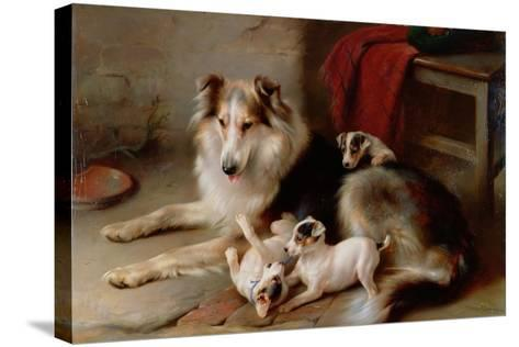 A Collie with Fox Terrier Puppies, 1913-Walter Hunt-Stretched Canvas Print