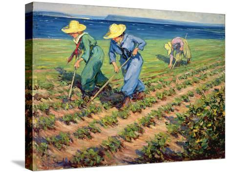 Land Girls Hoeing, c.1919-Manly Edward Macdonald-Stretched Canvas Print