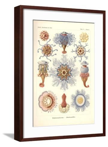 Siphonophorae - Jelly Fish, from 'Kunstformen Der Natur', Engraved by Adolf Giltsch, Published 1904-Ernst Haeckel-Framed Art Print