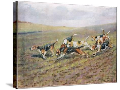 Crossing the Fields, Illustration from 'Hounds'-Thomas Ivester Lloyd-Stretched Canvas Print