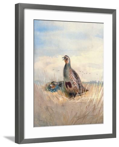 Two English Partridges, 1903-Archibald Thorburn-Framed Art Print