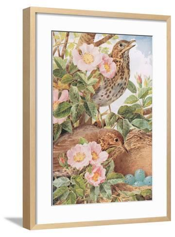 Song Thrushes with Nest, Illustration from 'Country Days and Country Ways', 1940s-Louis Fairfax Muckley-Framed Art Print