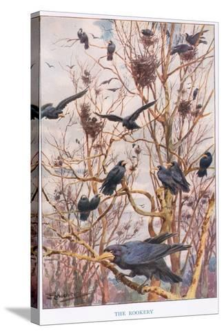 The Rookery, Illustration from 'Country Ways and Country Days'-Louis Fairfax Muckley-Stretched Canvas Print